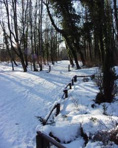 Winter-31-240x300
